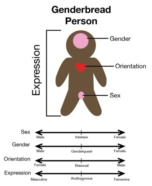 "One of the first examples of the ""Genderbread Person"" which has now updated. Photo: Medium"