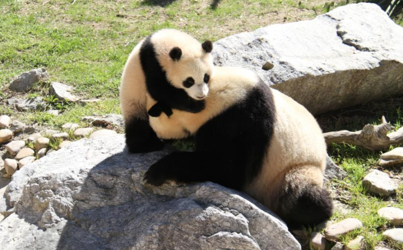 Berlin Zoo says Chinese pandas will 'feel at home'