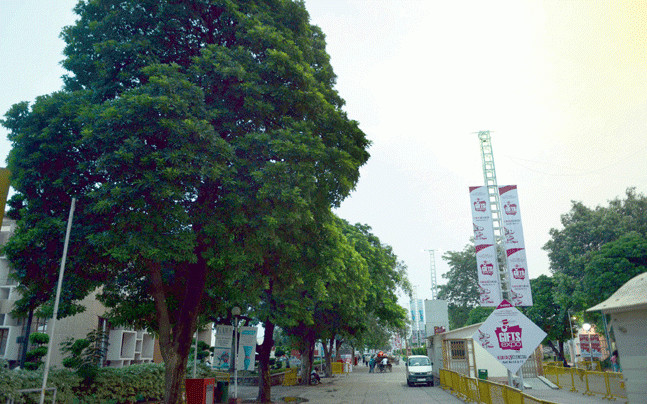 India: Online petition launched to stop axing of trees