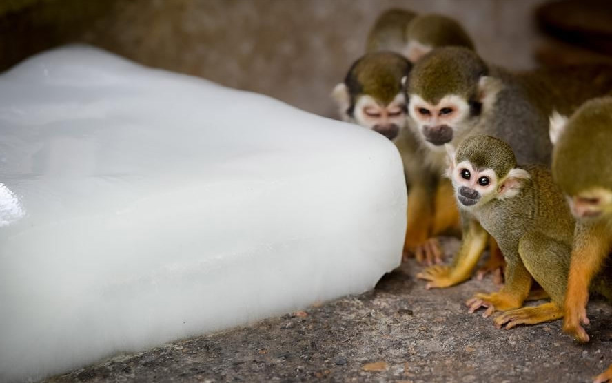 China's zoos help cool down animals as summer heat continues